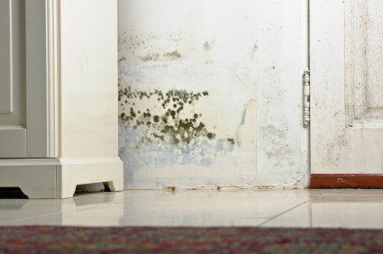 mold Rising Damp Mould Leads